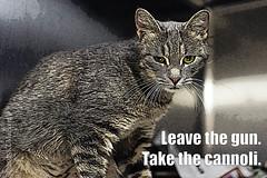 Leave the gun (KLMP) Tags: dog cat meme godfather