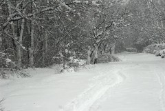 The Winter (series) (melleus) Tags: road park trees winter white snow cold nature weather way cool seasons path d200 snowfall imagemagick dcraw