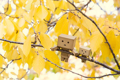 Embracing Autumn (Arielle.Nadel) Tags: danbo danboard revoltech autumn fall leaves minidanbo toyphotography