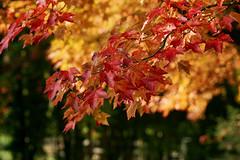 _DSC2491 (BrettGV) Tags: autumn sonnart18135
