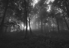 Adam and Eve (Cornish Northerner) Tags: trees lovers sunbeams forest woods magical mystical enchanted countryside monotone