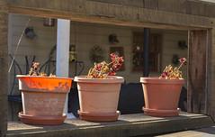 Pots on the fence_II (Pedro M. Gmez) Tags: downieville pots downievilleca goldrushtowns californiagoldrush