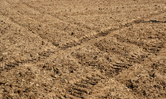 12-IMG_1850 (hemingwayfoto) Tags: acker ausstellung europa feld kartoffel linie messe spur