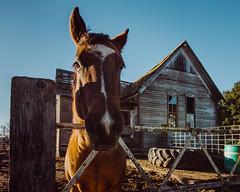 Howdy (Pedalhead'71) Tags: benge washington abandoned barn horse farm palouse