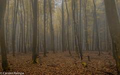Nationalpark Jasmund - Buchenwald (ck1berlin) Tags: nationalparkjasmund rgen herbst buchenwald nebel rgen