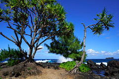 Keanae (marko.erman) Tags: keanae hanaroad maui hawaii usa landscape pacific ocean trees water waves sun travel popular pov sony