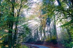 Sun (Igelskar) Tags: sun sonnenstrahlen hikingtour brugg bzberg linner linde rmerweg wanderfreaksch