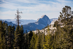 Half Dome from Olmsted (Bryan Nabong) Tags: easternsierras geography halfdome olmstedpoint tiogapass yosemite california landscape mountain northamerica trees unitedstates