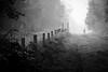 Isolation (Aidan Mincher) Tags: blackandwhite cannock chase woodland wood fence dogwalker people nature canon5dmk3