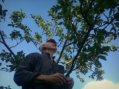 up (miradel) Tags: tree tata sky blue green summer human man dear simple moment simplicity cinematic day sunny work busy happy pastoral village typical portrait people person persons adventure brave elder up nature natural organic food fruit fruits collecting