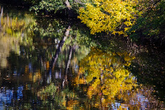 A Splash of Fall (matthewkaz) Tags: fall autumn leaves tree trees colors river redcedarriver water reflection reflections msu michiganstateuniversity campus collegecampus eastlansing michigan 2016 yellow