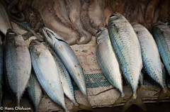Essaouira (Hans Olofsson) Tags: 2016 essaouira marocko morocco fish fisk