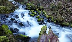 Wahkeena Falls, Oregon (Mr. Ansonii) Tags:               wahkeena wahkeenafalls waterfall oregon river hiking portland forest trees stone green nikon d3300 slowshutter longexposure westcoast multnomahfalls