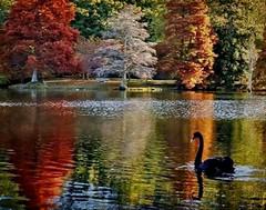 Tapiz de Otoño (☮ Montse;-))) Tags: otoño tapiz textura