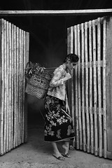 DREI0443-Edit (drei6) Tags: beauty people woman flower portrait headshot fashion wood outdoor studio light color blackwhite splash asian