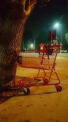THE UNSTOPPABLE FORCE OF SHOPPING MEETS AN IMMOVABLE OBJECT (akahawkeyefan) Tags: shoppingcart davemeyer tree lights street sidewalk