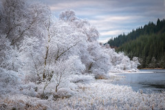 Frostbitten (Images by William Dore) Tags: trees trossachs scotland visitscotland lochs cold weather landscape outside outdoors winter autumn ice nikon nikondf zeiss frost frozen