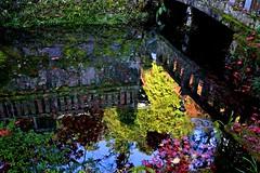 Reflection world (tez-guitar) Tags: water pond reflection reflections autumn autum autumn leaf leaves temple kanagawa pentax pentaxart sigma