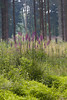 ckuchem-3553 (christine_kuchem) Tags: abholzung baum bienenweide blumen bäume fingerhut holzwirtschaft laubwald lichtung pflanzen spontanvegetation vegetation wald waldlichtung wildblumen wildpflanze wild