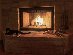 20161209_190922 (bullcreek) Tags: cats fireplace warmth cozy winter