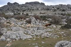 2015-02-07 10.59.03 (Reydelpro) Tags: españa trekking andalucia malaga senderismo torcal antequera 2015 espaa reydelpro