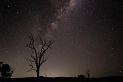Single shot of a 83 image stack (goodgirlbetty) Tags: tree way stars landscape outside star mt farm maroon space stack galaxy milky milkyway bushland