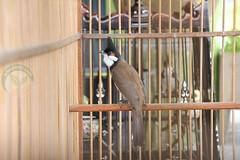 พฤติกรรม นกหลังถ่ายขน