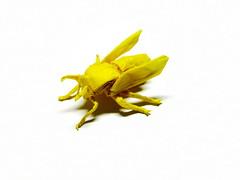Wasp (Al3bbasi.) Tags: sculpture art paper insect design origami wasp kamiyasatoshi al3bbasi