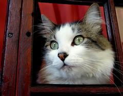 4/6 to give me a beautiful moment ... (Raul Jaso) Tags: windows cats window cat ventana chats gatos finestra ventanas gato gata felinos felino fz finestre gatas leschats fz150 panasonicfzseries panasonicfz150 rauljaso rauljasofotografia rauljasophotography