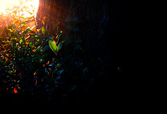 La vida se abre camino (Chau DOG) Tags: flowers plants dog naturaleza flores verde primavera nature digital fleurs garden photo reflex nikon plantas foto natural natur pflanzen jardin blumen nikkor blommor garten zahrada plantes trdgrd chau vxter 2014 kvtiny   greenspring  proda d90 naturels rostliny  nikond90 prodn vertprintemps       zelenjarn chaudog copyright2015dariogiordanotodoslosderechosreservados