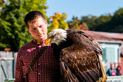 Zoo Hannover Oktober 2015 (mbap266) Tags: oktober zoo tiere hannover 2015 zoohannover seeadler tierpfleger erlebniszoohannover weiskopfseeadler erlebniszoo canoneos70d ef70200mmf28lisiiusm