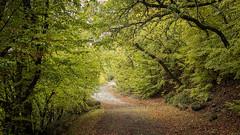 Herbst (Extrud) Tags: nebel herbst natur ukraine landschaft wald yalta      herbstfarben ef24105mmf4 dolossi canoneos5dmarkiii