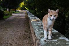 Micio micio micio ... (antony5112) Tags: pet pets animali animals gatto gatti micio mici cat cats ruby5 ruby10