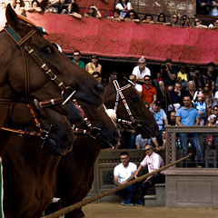 Palio II (Magnifissimo) Tags: leica travel summer vacation italy horse animal sport race outside event tuscany siena palio horserace m9