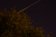 DSC_0004 (Joseph.Monk.Photography) Tags: longexposure tree nature night plane stars nikon long exposure trail hertfordshire rickmansworth nikond3200 planetrail d3200