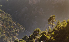 Lonely (Vertical Planar) Tags: mountain athens greece arma parnitha