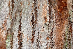 fissures and waves (dustaway) Tags: nature waves pattern australia bark nsw treebark myrtaceae australianspiders northernrivers australiantrees whitemahogany tullera eucalyptusacmenoides fibrousbark tullerapark