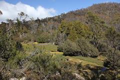 Walls of Jerusalem National Park (cathm2) Tags: travel trees nature walking nationalpark hiking australia tasmania wallsofjerusalem