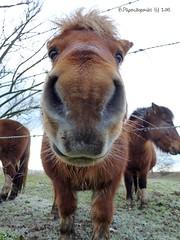 MABLY Gravière aux oiseaux (BPBP42) Tags: horse animal fence cheval barriere