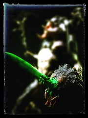 Narin: Predator Bad Blood (SS) (OBigFace) Tags: statue axe warrior predator collectibles sideshow spear narin sideshowcollectibles badblood