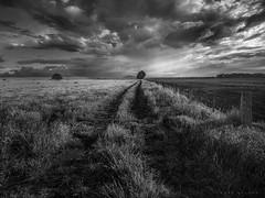 Wattle Flat (Mark McLeod 80) Tags: tree field clouds rural australia victoria vic ballarat paddock markmcleod wattleflat canontse24mmf35lii markmcleodphotography