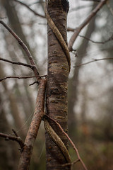 The Law of Nature (-Baptiste Coub-) Tags: trees fog forest outdoor hiver paysage foggyday faune chablais 35mn allinge foggyforest exterrieur d3100 baptistecoubronne grottenotredamedelourde