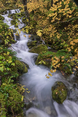 Autumn stream (jeff's pixels) Tags: mount rainer mountrainer national forest stream river creek exposure long water nature leaf tree branch outdoor hiking amazing beauty fall autumn