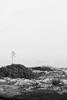 Raise up (lorenzoviolone) Tags: bw blackwhite blackandwhite d5200 dslr flowers monochrome nikon nikond5200 plants polaroid665 reflex seascape tall vsco vscofilm growth horizon horizononthewater islands sea seaside streetphoto streetphotobw streetphotography travel:malta=aug2016 vegetation ä¦addingli malta