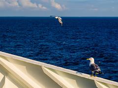 P7130187 (.: Sophie ][ Delaloye :.) Tags: princess maria baltic sea helsinki st petersburg boat cruise