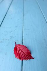 Rotes Blatt auf blauem Tisch (alopecosa) Tags: blatt freiburg stillleben tisch perspektive