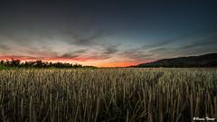 coucher de soleil (Bruno. Thomé) Tags: pentaxk1 sigma1750mmf28 france indreetloire chinon coucherdesoleil paysage