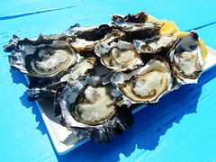 Tasmanian Oysters - Australia (pacoalfonso) Tags: pacoalfonsocom travel australia tasmania food macro oyster