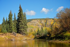 Perfect Fall Day on the River (MIKOFOX  Show Your EXIF!) Tags: river willows canada nordenskioldriver fujifilmxt1 yukon water aspen fall spruce landscape xt1 september showyourexif mikofox xf18135mmf3556rlmoiswr