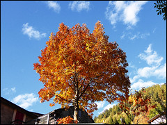 Autunno a Carena (ninin 50) Tags: autunno carena ticino svizzera ninin